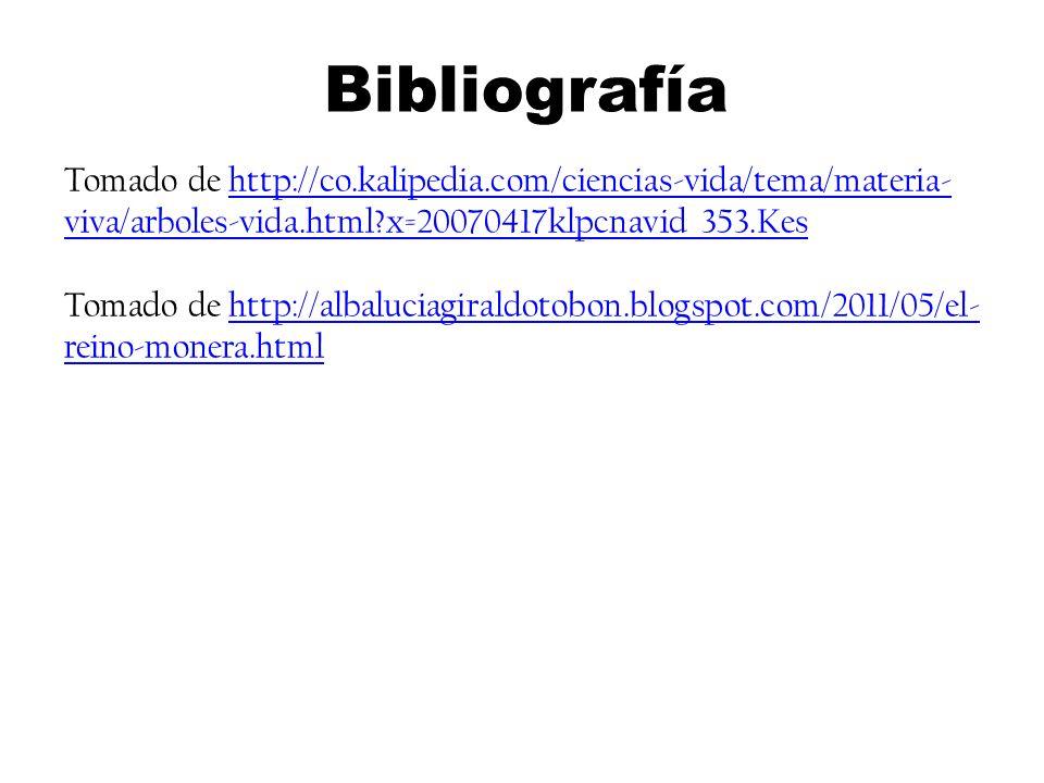 Bibliografía Tomado de http://co.kalipedia.com/ciencias-vida/tema/materia-viva/arboles-vida.html x=20070417klpcnavid_353.Kes.