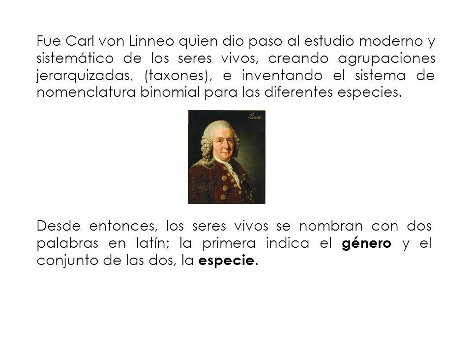 Fue Carl von Linneo quien dio paso al estudio moderno y sistemático de los seres vivos, creando agrupaciones jerarquizadas, (taxones), e inventando el sistema de nomenclatura binomial para las diferentes especies.