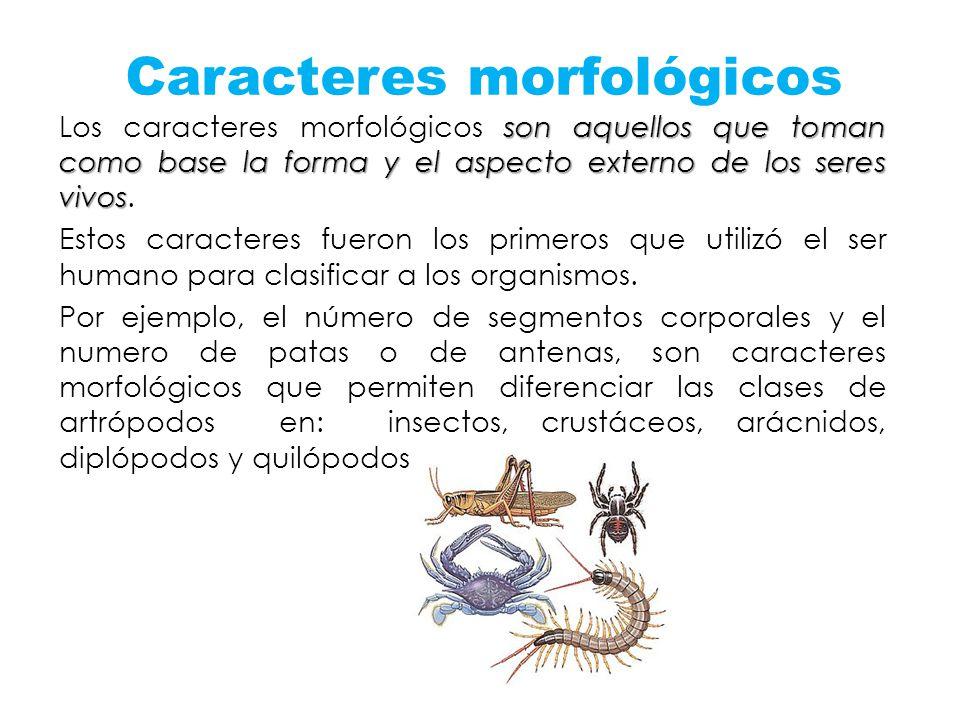 Caracteres morfológicos