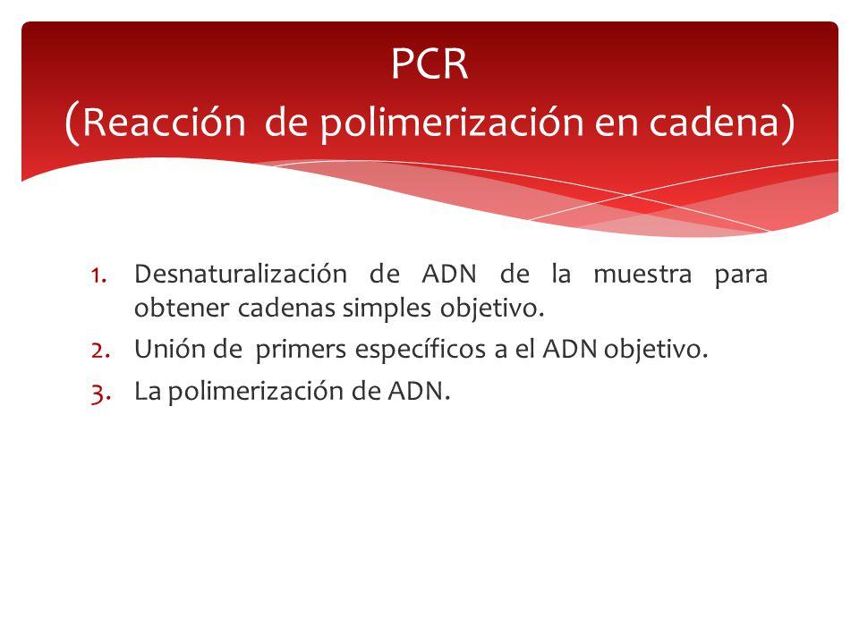 PCR (Reacción de polimerización en cadena)