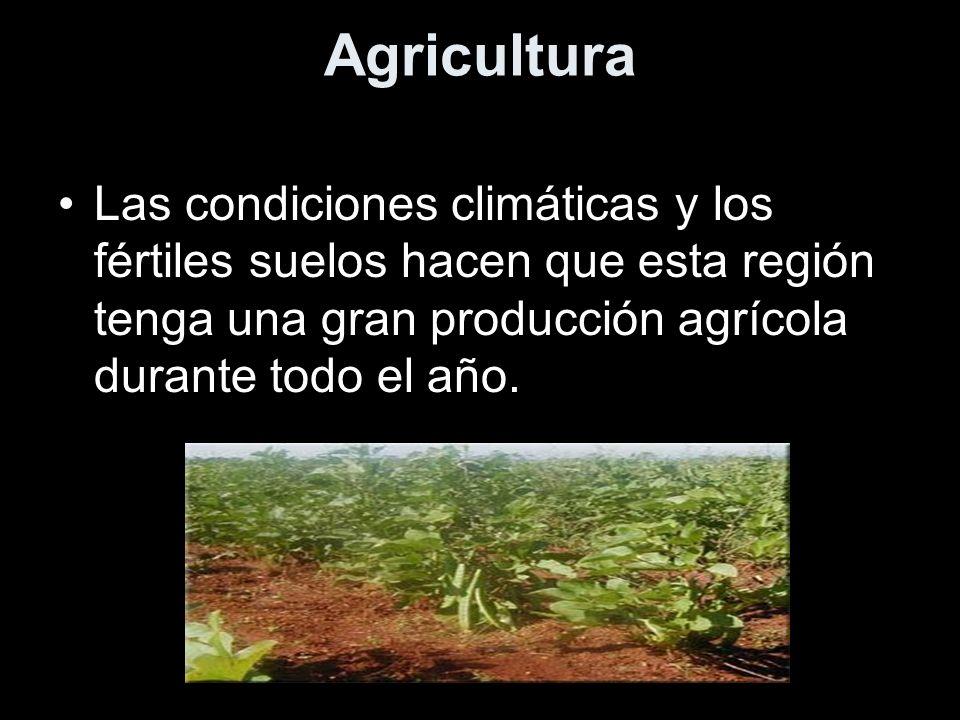 AgriculturaLas condiciones climáticas y los fértiles suelos hacen que esta región tenga una gran producción agrícola durante todo el año.