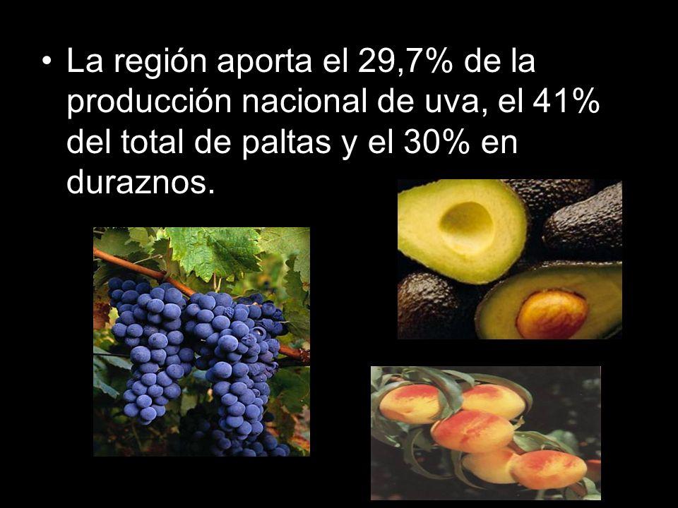 La región aporta el 29,7% de la producción nacional de uva, el 41% del total de paltas y el 30% en duraznos.