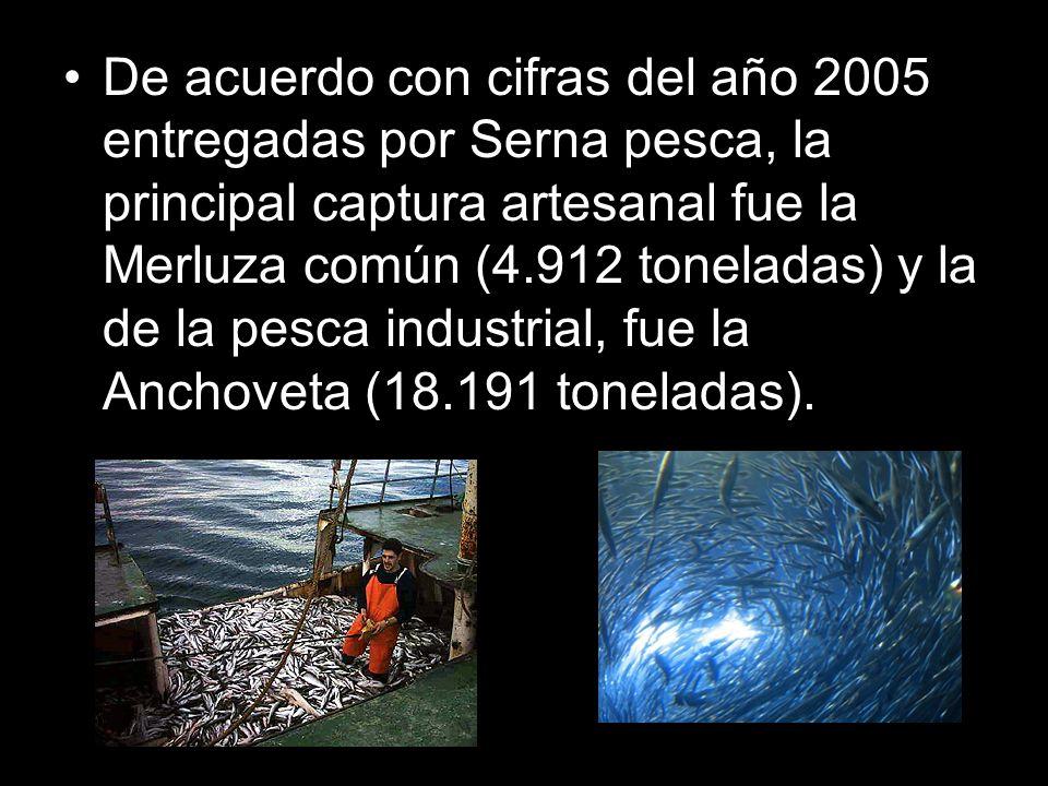 De acuerdo con cifras del año 2005 entregadas por Serna pesca, la principal captura artesanal fue la Merluza común (4.912 toneladas) y la de la pesca industrial, fue la Anchoveta (18.191 toneladas).