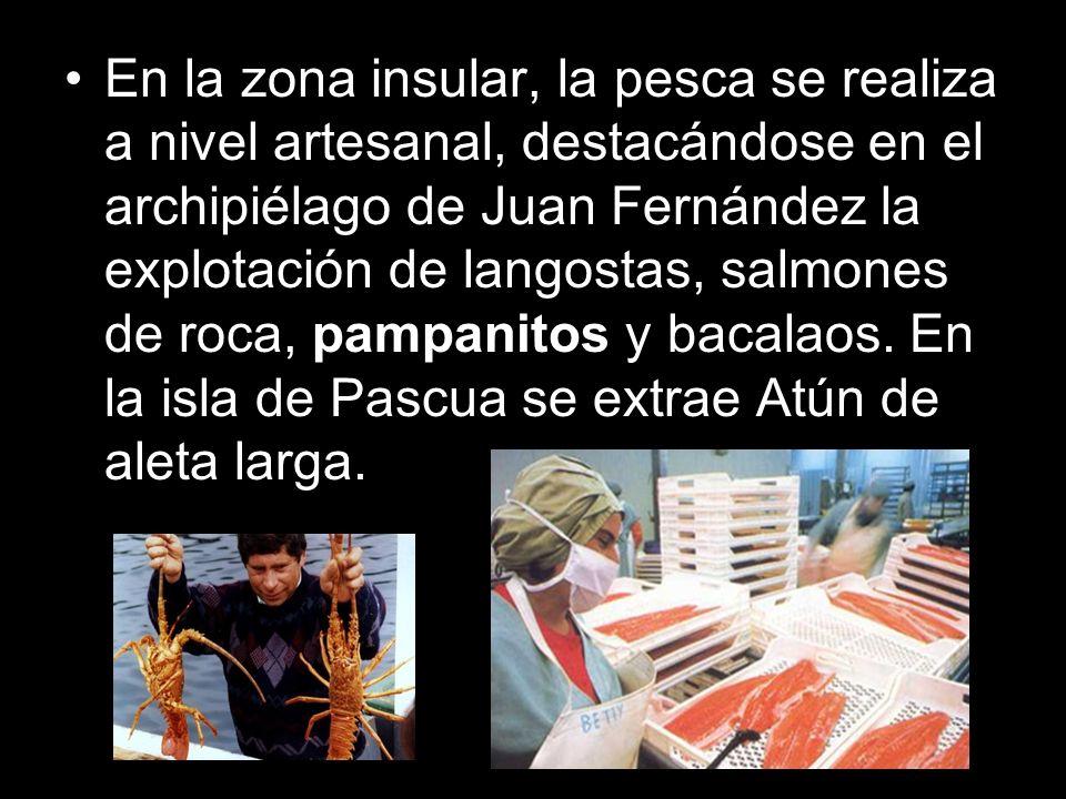 En la zona insular, la pesca se realiza a nivel artesanal, destacándose en el archipiélago de Juan Fernández la explotación de langostas, salmones de roca, pampanitos y bacalaos.