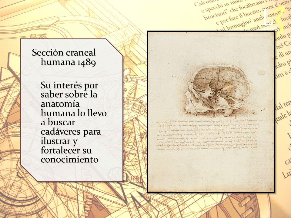 Sección craneal humana 1489