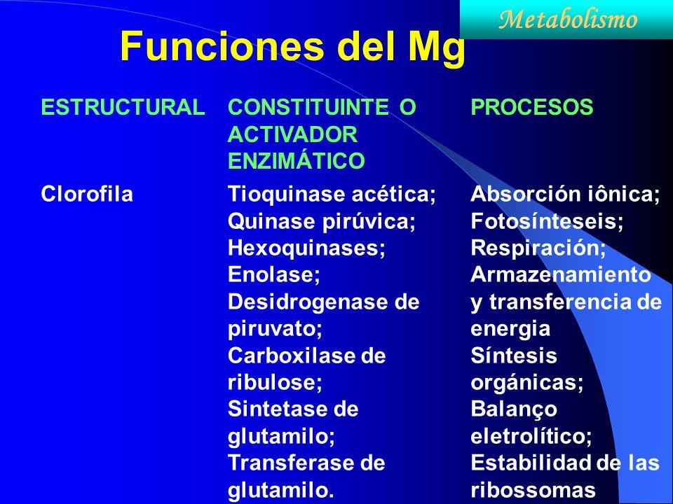 Funciones del Mg Metabolismo ESTRUCTURAL