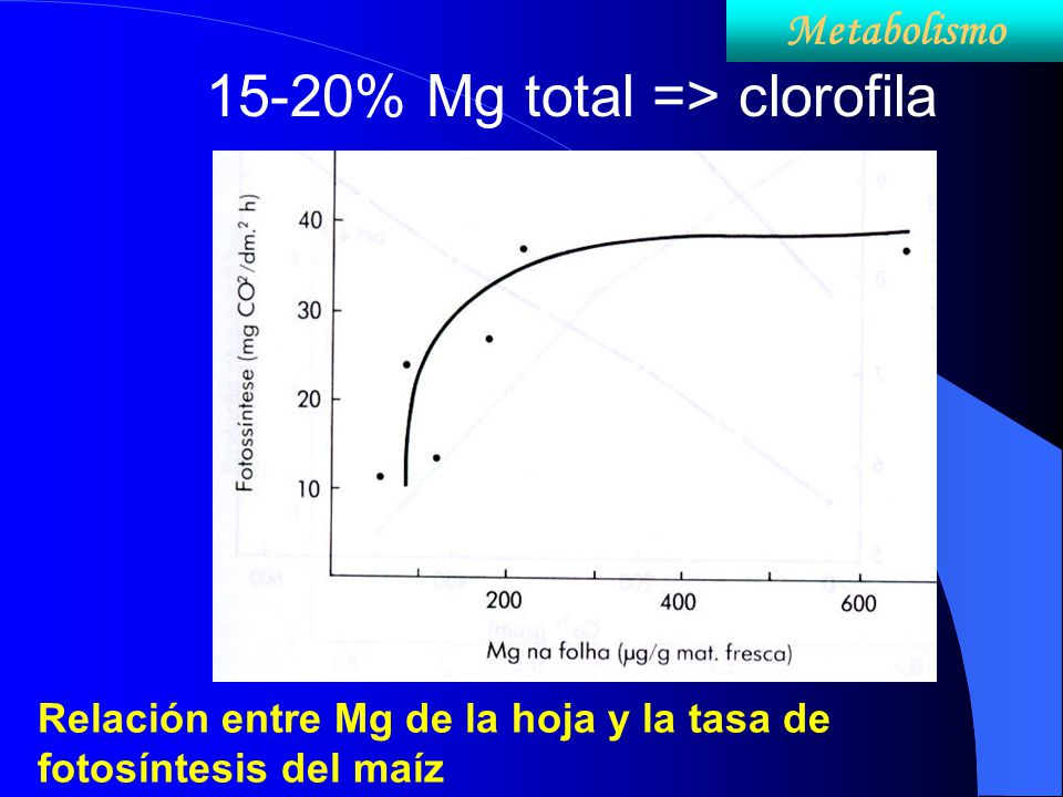 15-20% Mg total => clorofila