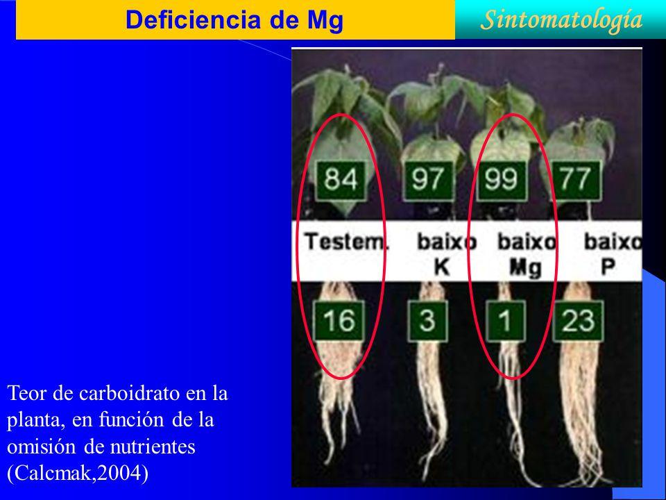 Sintomatología Deficiencia de Mg