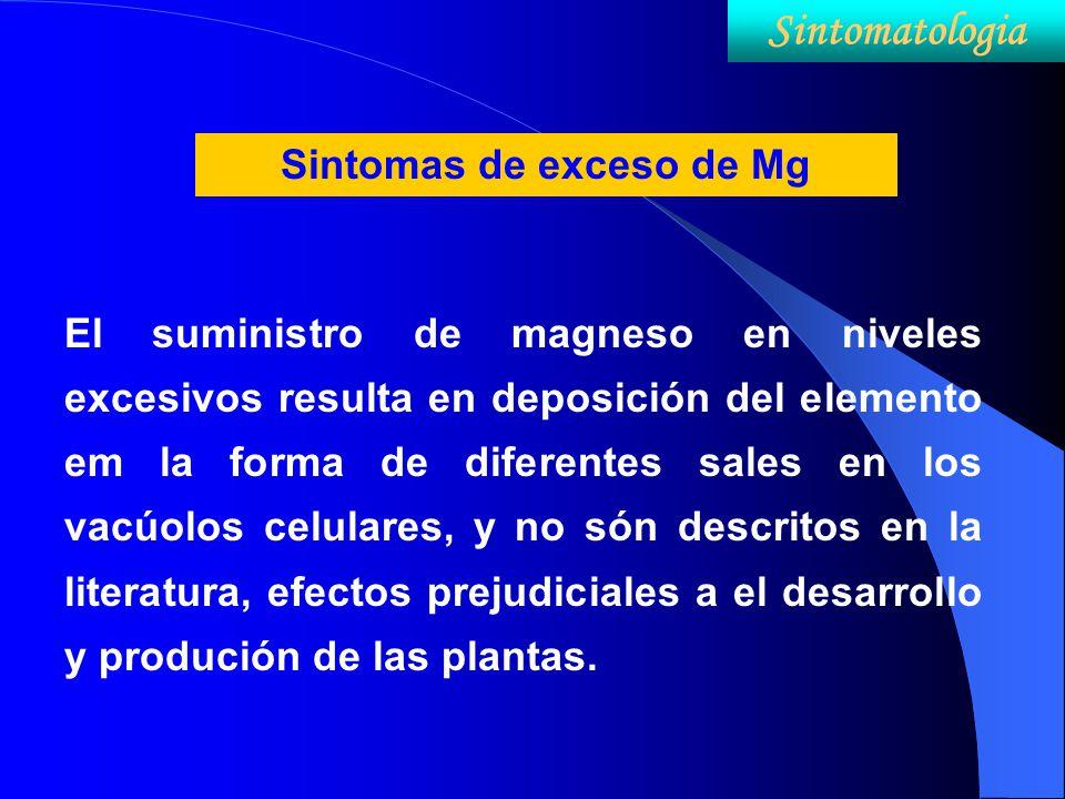 Sintomas de exceso de Mg