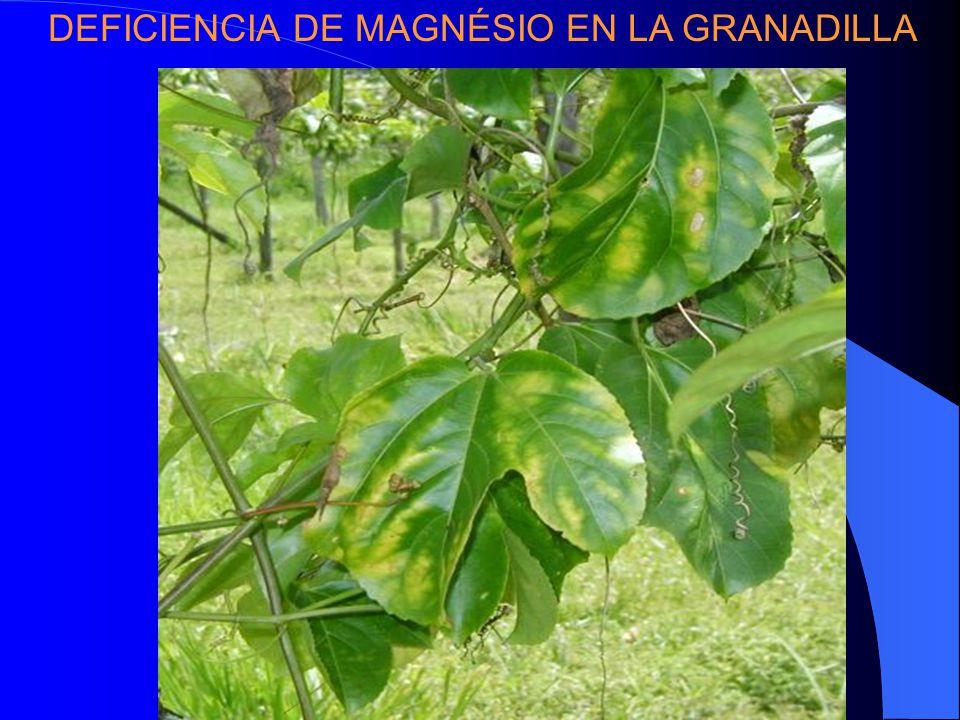DEFICIENCIA DE MAGNÉSIO EN LA GRANADILLA