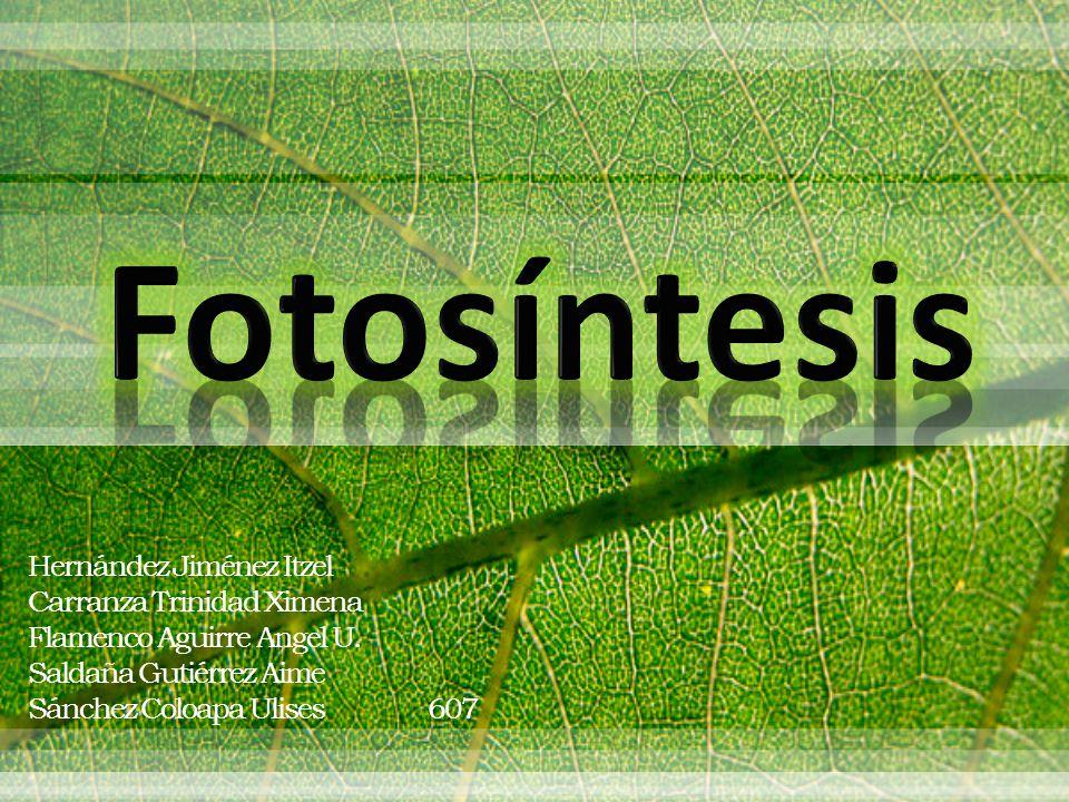 Fotosíntesis Hernández Jiménez Itzel Carranza Trinidad Ximena
