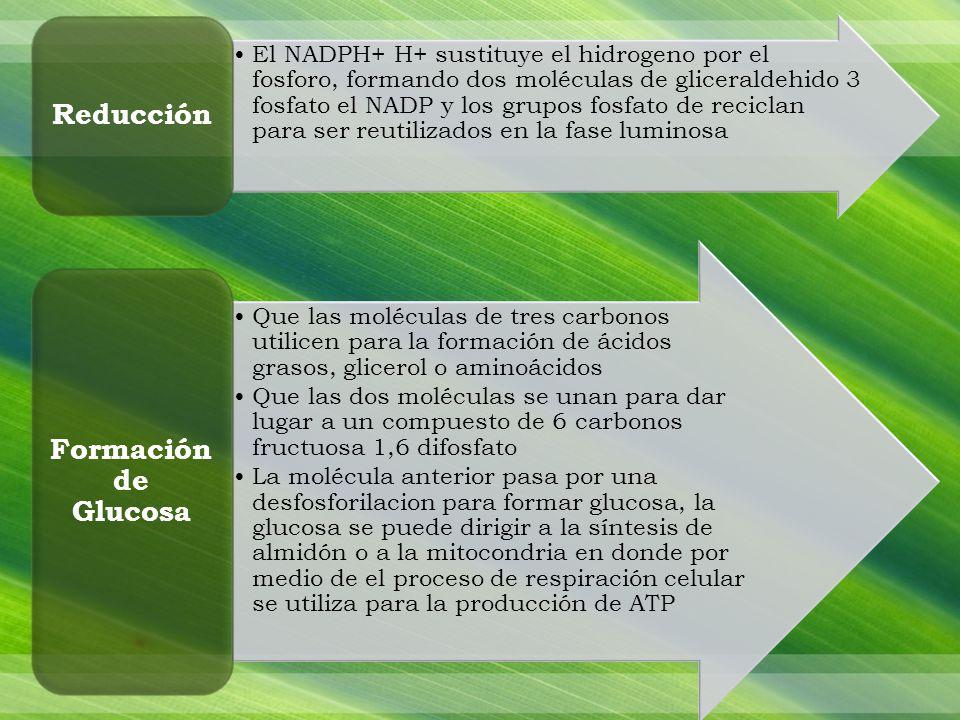 Reducción Formación de Glucosa