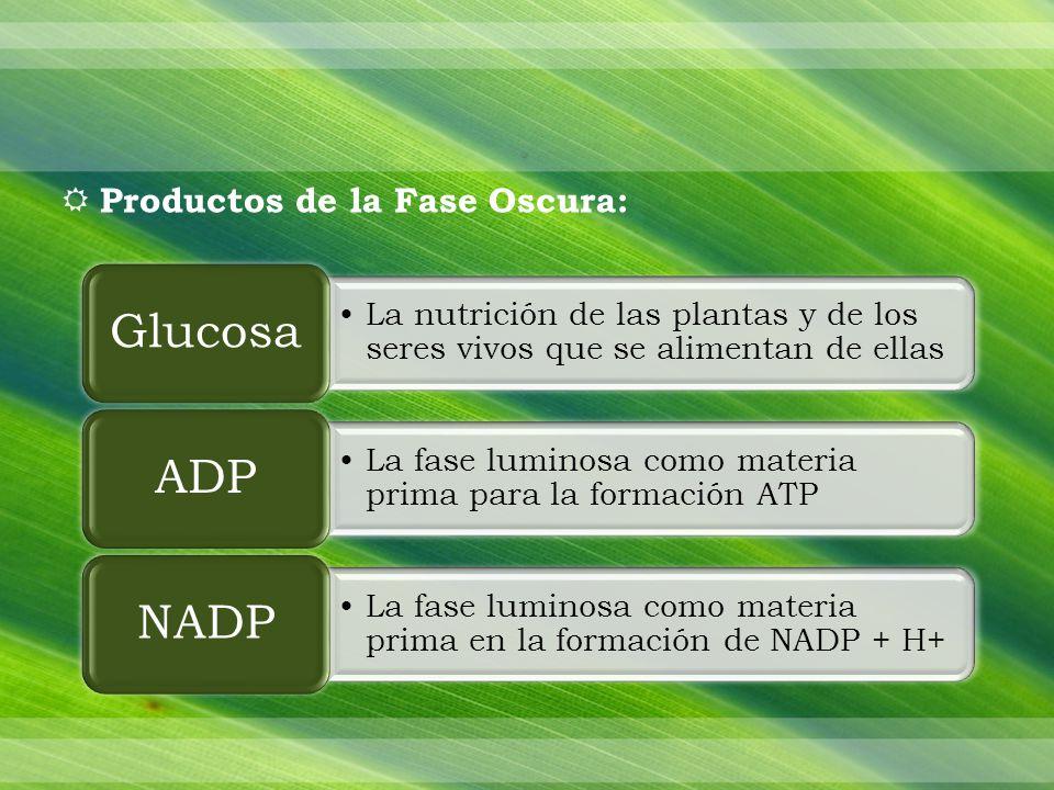 Productos de la Fase Oscura: