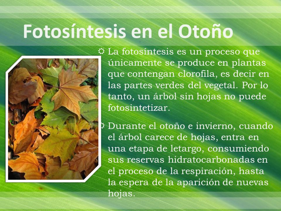 Fotosíntesis en el Otoño