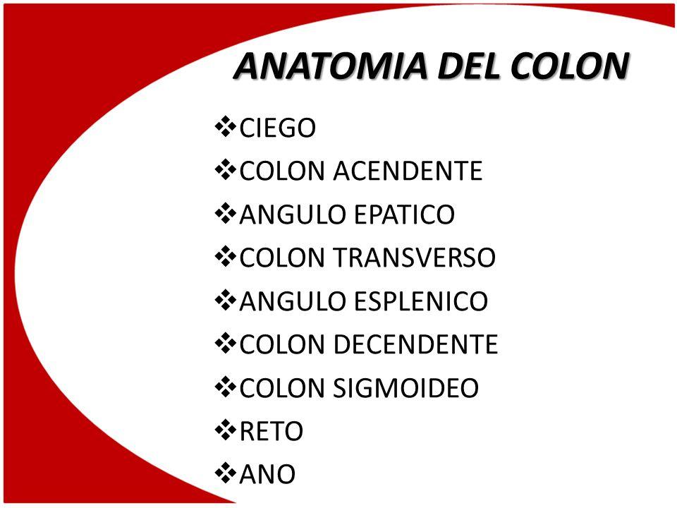 ANATOMIA DEL COLON CIEGO COLON ACENDENTE ANGULO EPATICO