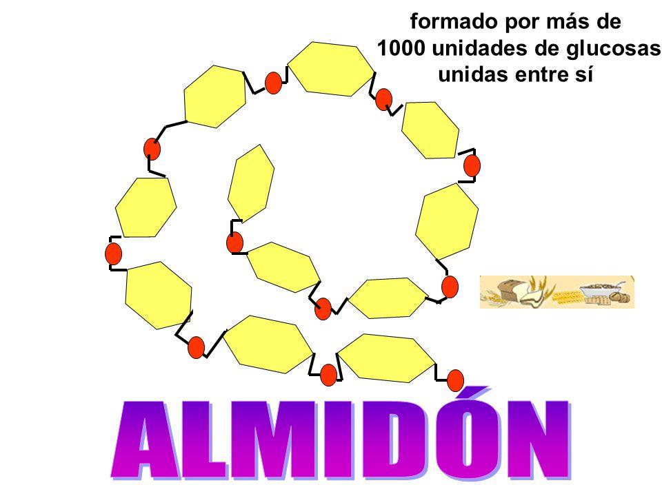 formado por más de 1000 unidades de glucosas unidas entre sí ALMIDÓN