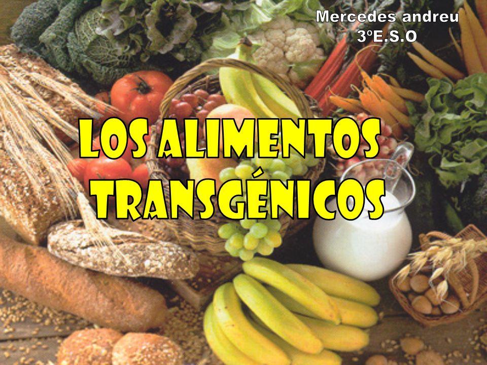 Mercedes andreu 3ºE.S.O Los alimentos transgénicos
