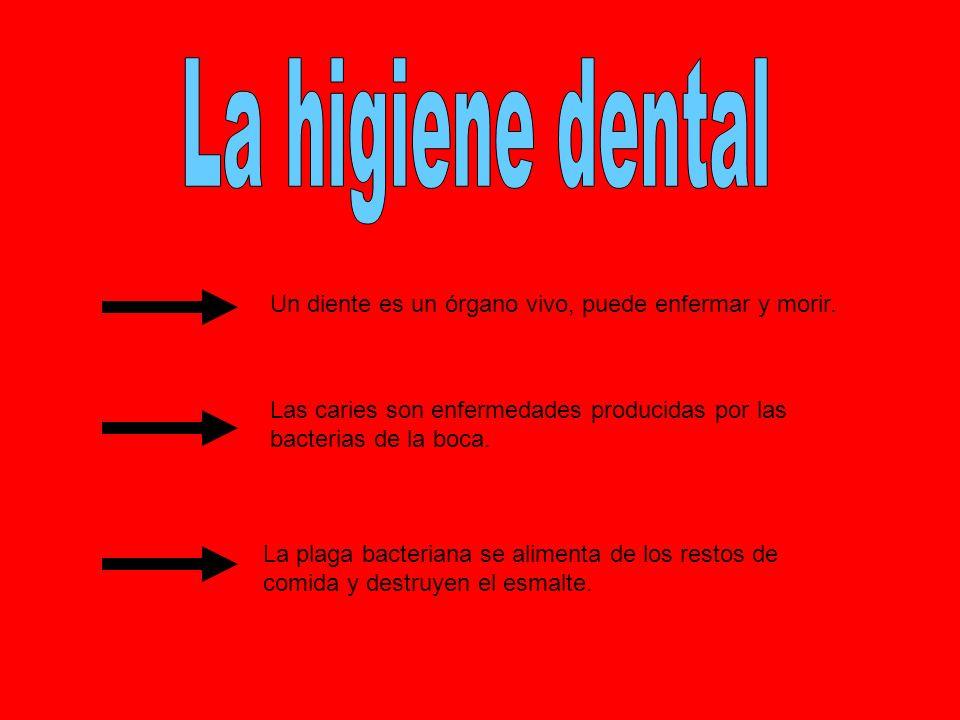La higiene dental Un diente es un órgano vivo, puede enfermar y morir.
