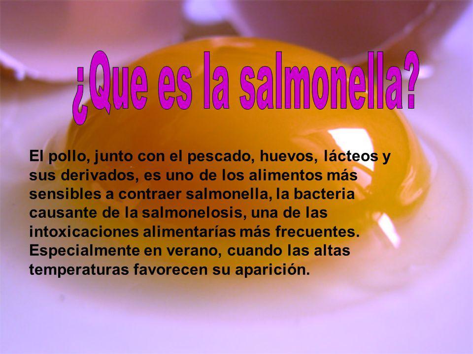 ¿Que es la salmonella