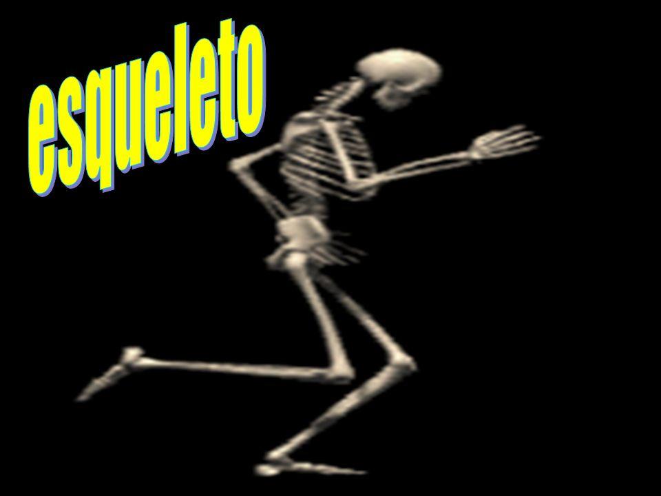 esqueleto E ES