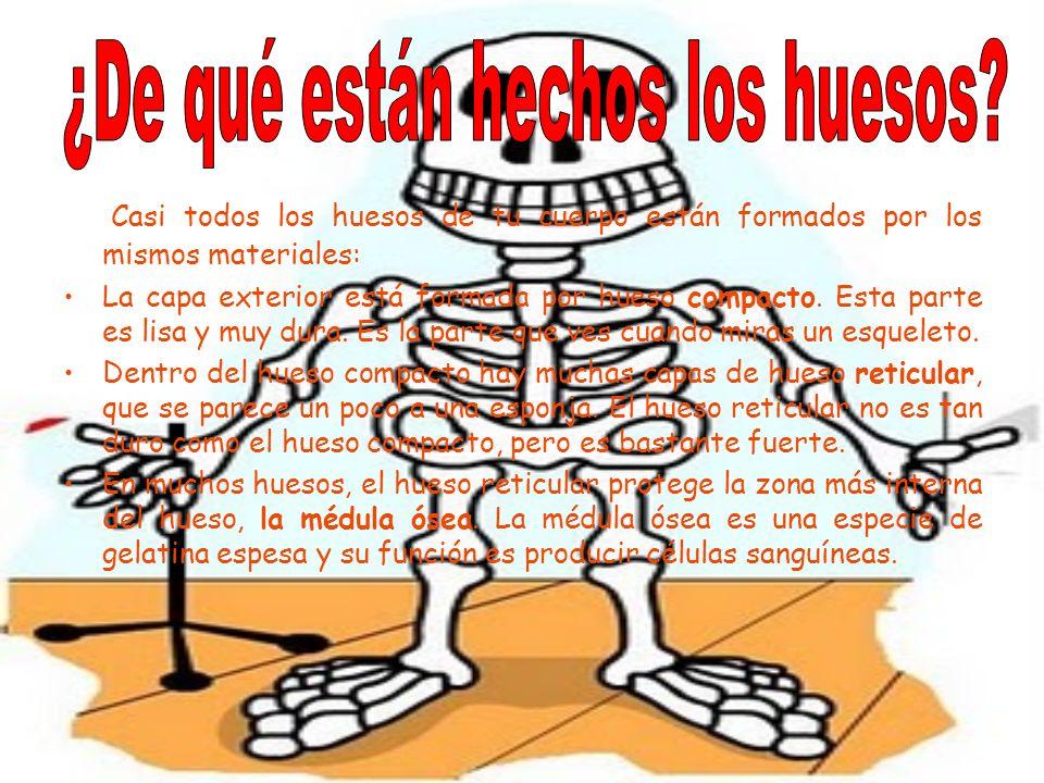 ¿De qué están hechos los huesos