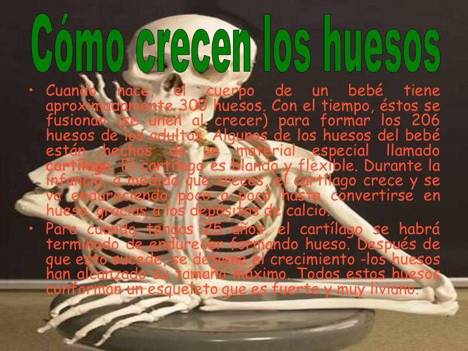 Cómo crecen los huesos