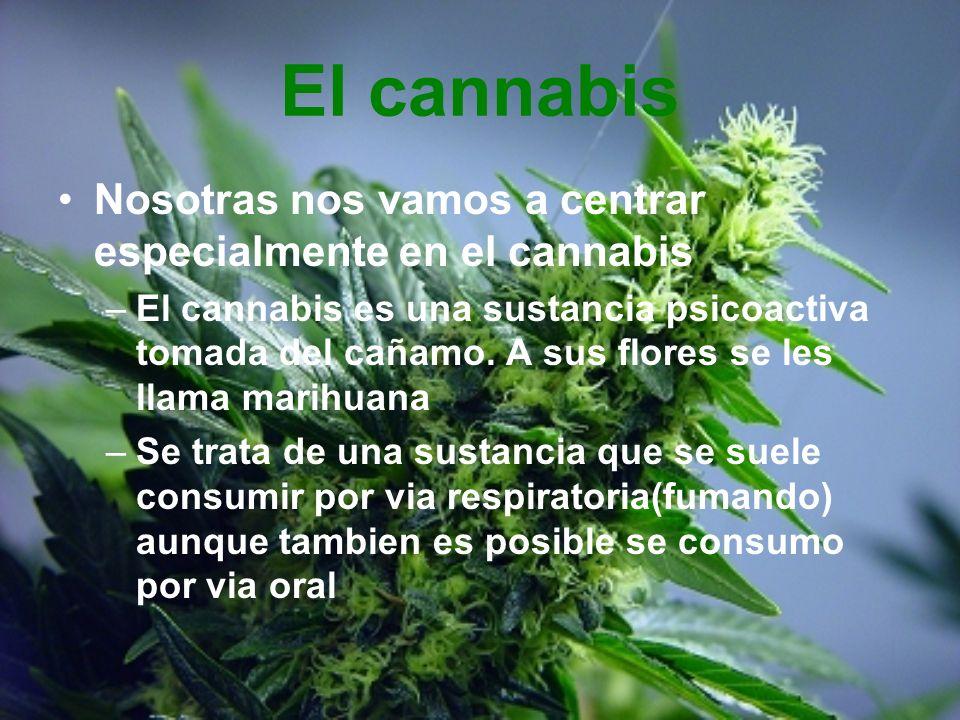 El cannabis Nosotras nos vamos a centrar especialmente en el cannabis