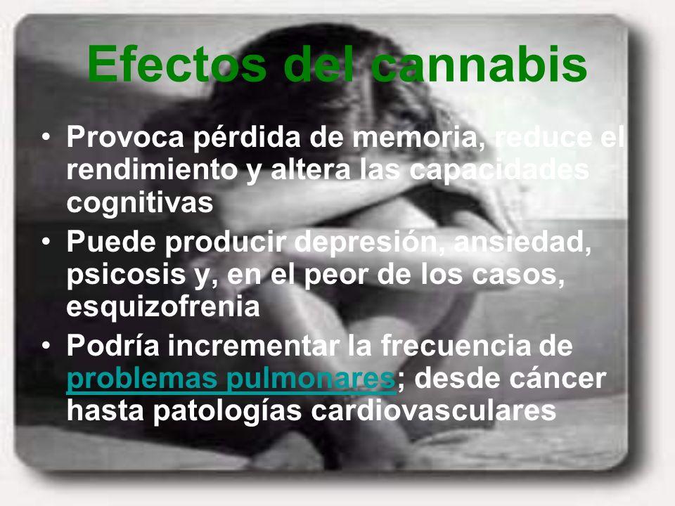 Efectos del cannabis Provoca pérdida de memoria, reduce el rendimiento y altera las capacidades cognitivas.