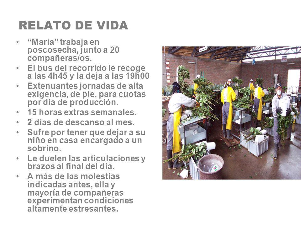 RELATO DE VIDA María trabaja en poscosecha, junto a 20 compañeras/os. El bus del recorrido le recoge a las 4h45 y la deja a las 19h00.