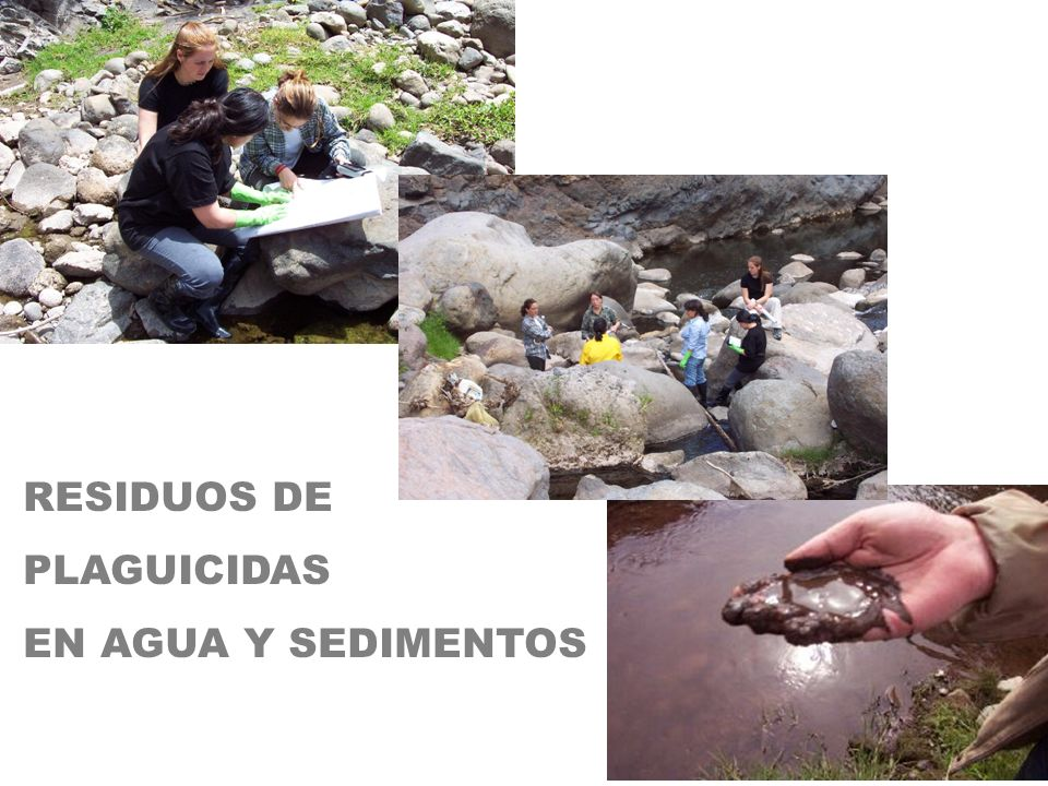 RESIDUOS DE PLAGUICIDAS EN AGUA Y SEDIMENTOS 125 125