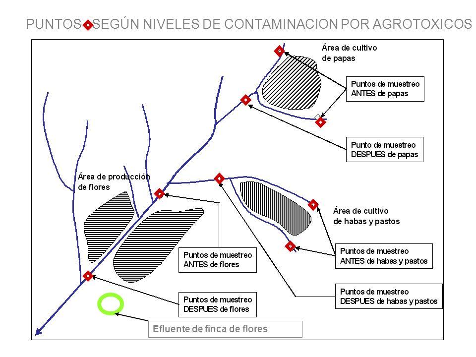 PUNTOS SEGÚN NIVELES DE CONTAMINACION POR AGROTOXICOS