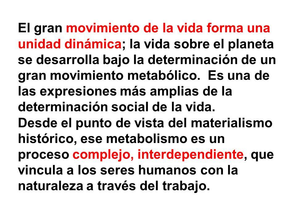 El gran movimiento de la vida forma una unidad dinámica; la vida sobre el planeta se desarrolla bajo la determinación de un gran movimiento metabólico.