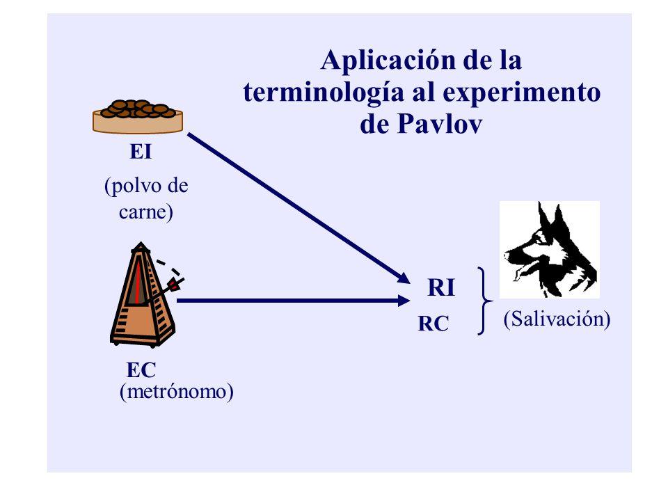 Aplicación de la terminología al experimento de Pavlov