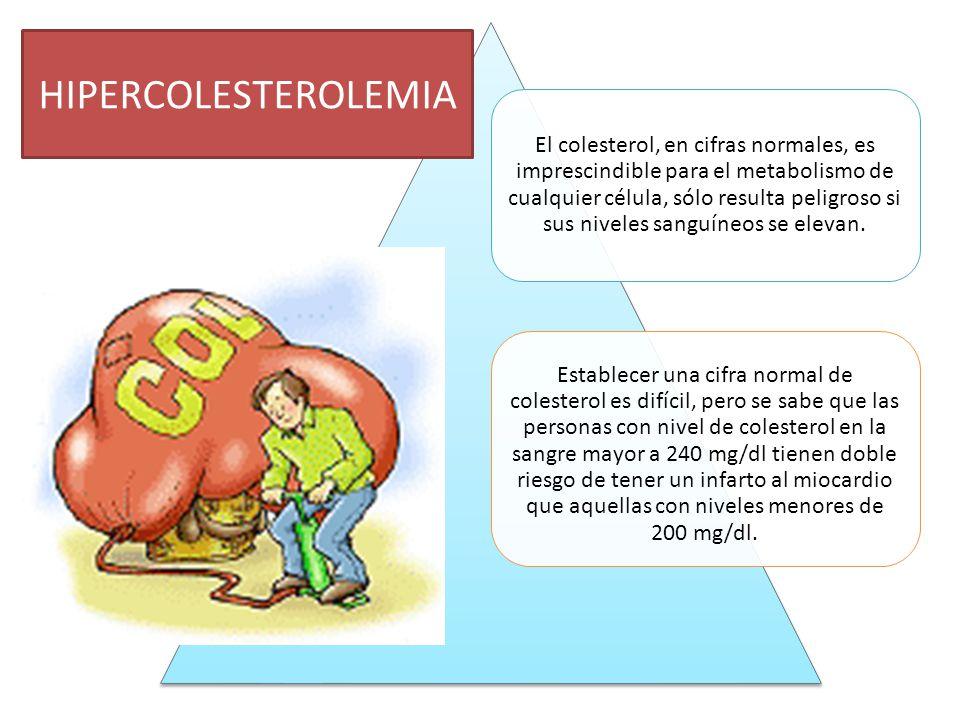El colesterol, en cifras normales, es imprescindible para el metabolismo de cualquier célula, sólo resulta peligroso si sus niveles sanguíneos se elevan.