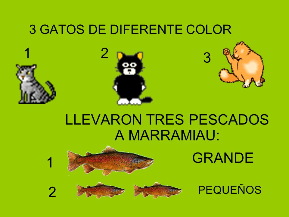 3 GATOS DE DIFERENTE COLOR