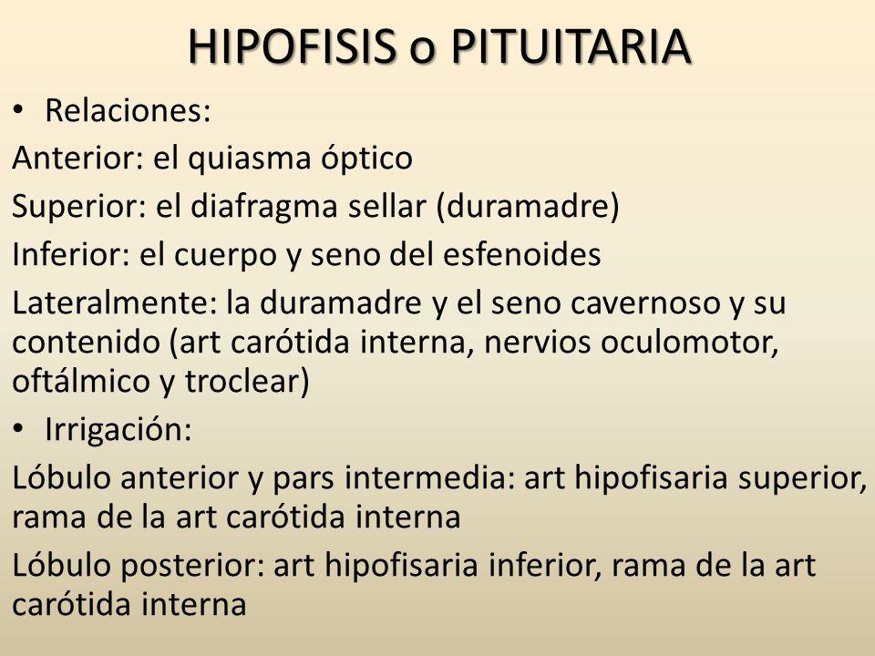 HIPOFISIS o PITUITARIA