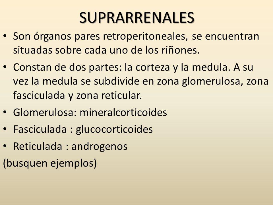 SUPRARRENALES Son órganos pares retroperitoneales, se encuentran situadas sobre cada uno de los riñones.