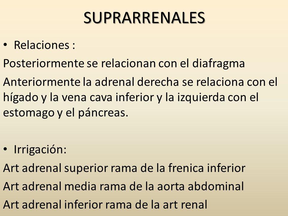 SUPRARRENALES Relaciones :