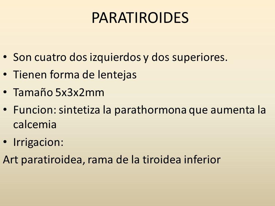 PARATIROIDES Son cuatro dos izquierdos y dos superiores.