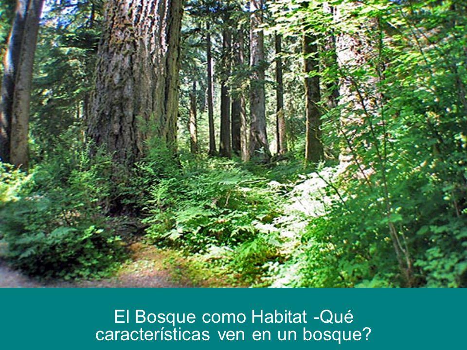El Bosque como Habitat -Qué características ven en un bosque