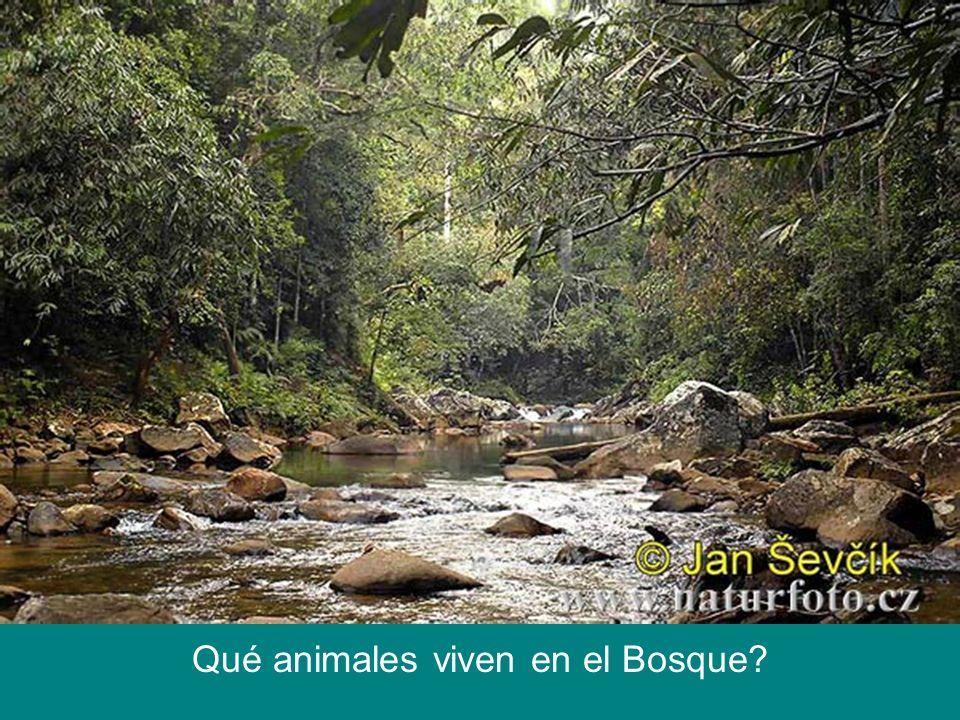 Qué animales viven en el Bosque