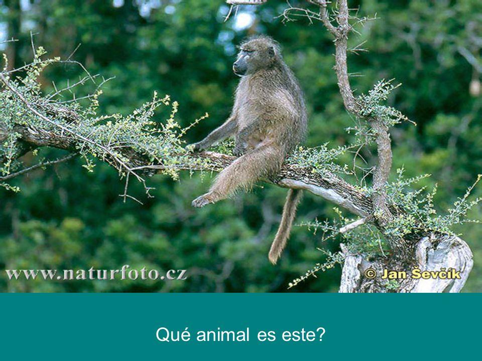 Qué animal es este