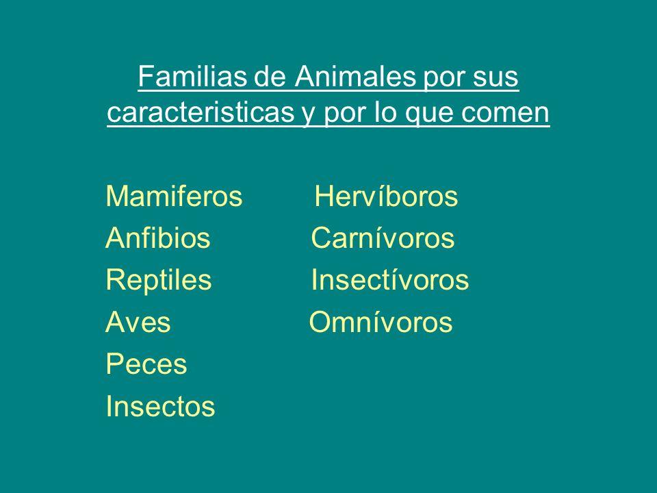 Familias de Animales por sus caracteristicas y por lo que comen
