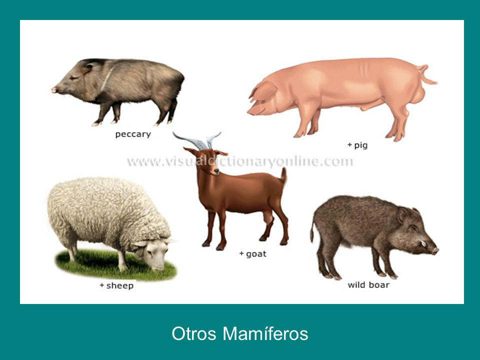 Otros Mamíferos