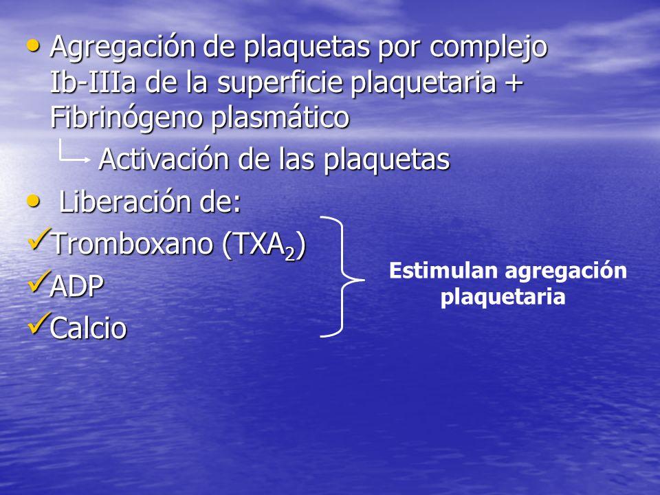 Activación de las plaquetas Liberación de: Tromboxano (TXA2) ADP