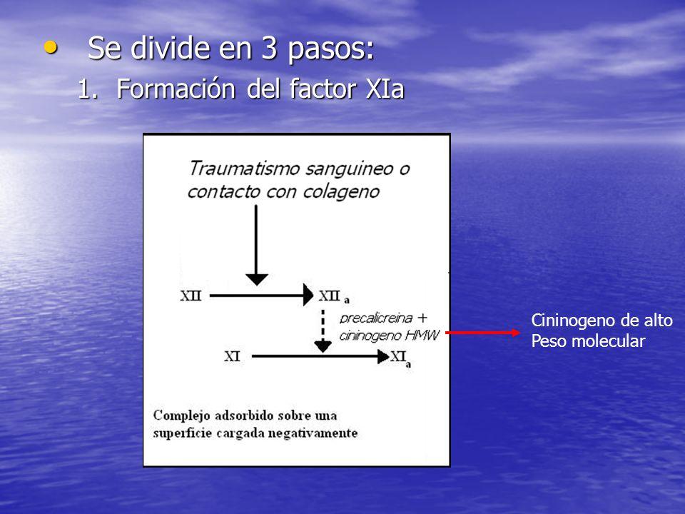 Se divide en 3 pasos: Formación del factor XIa Cininogeno de alto