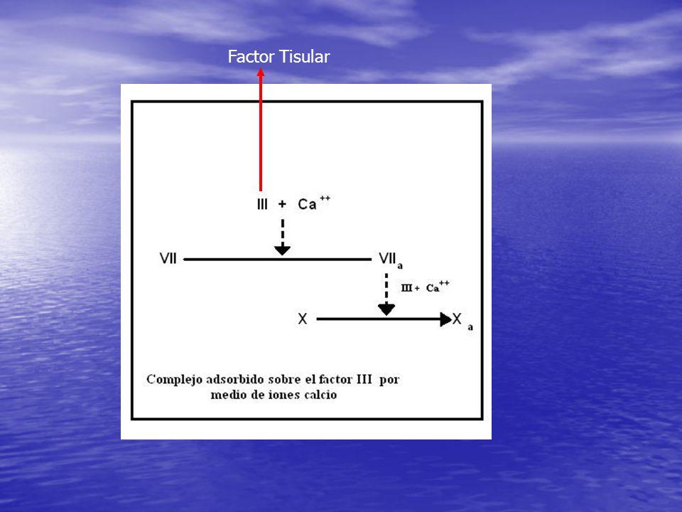 Factor Tisular