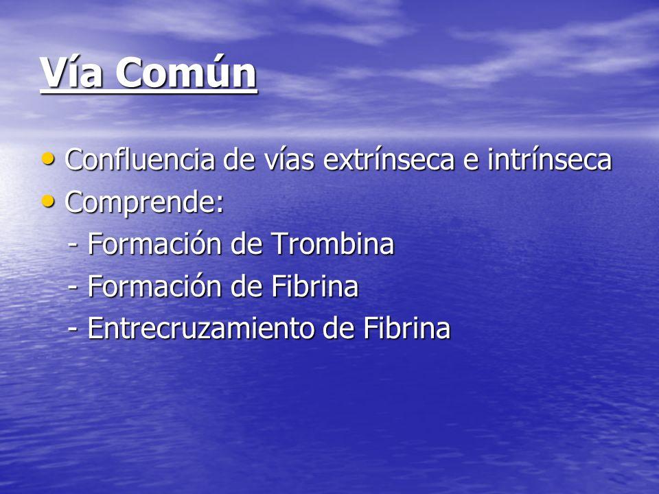 Vía Común Confluencia de vías extrínseca e intrínseca Comprende: