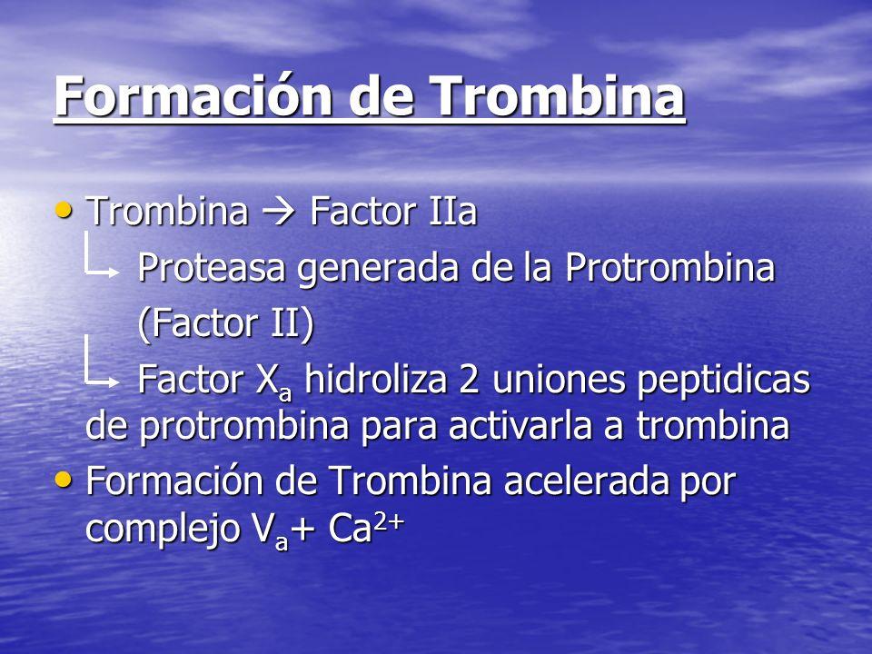 Formación de Trombina Trombina  Factor IIa