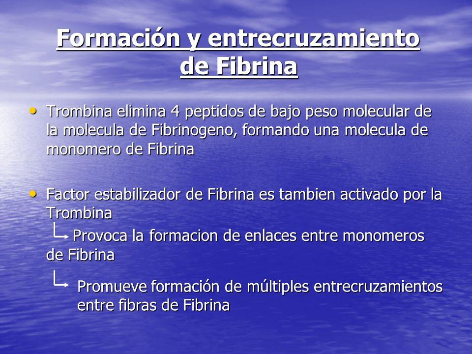 Formación y entrecruzamiento de Fibrina
